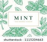 hand drawn mint illustration... | Shutterstock .eps vector #1115204663