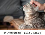 Stock photo happy cat lovely comfortable sleeping by the woman stroking hand grip at love to animals concept 1115243696