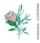 bouquet of watercolor flower... | Shutterstock . vector #1115252564