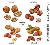 walnut  peanut  hazelnut ... | Shutterstock .eps vector #1115272940