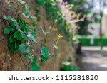 stone and brick walls | Shutterstock . vector #1115281820