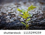planting trees growth passion... | Shutterstock . vector #1115299259