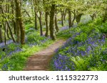 Talbenny Woods Bluebells
