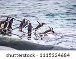 group of adult chinstrap... | Shutterstock . vector #1115324684