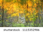 jaguar at sunset | Shutterstock . vector #1115352986