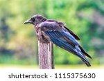 horizontal close up shot of a... | Shutterstock . vector #1115375630