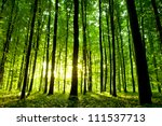 beautiful green forest | Shutterstock . vector #111537713