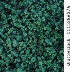 green leaf texture. leaf... | Shutterstock . vector #1115386376