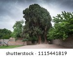 the cypress of abarkuh  sarv e... | Shutterstock . vector #1115441819