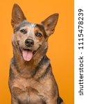 portrait of an australian... | Shutterstock . vector #1115478239