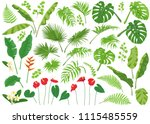 vivid tropical flowers and... | Shutterstock .eps vector #1115485559