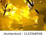golden maple leaves exhibiting... | Shutterstock . vector #1115568548
