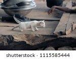 adorable animals   photo of a... | Shutterstock . vector #1115585444