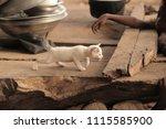 adorable animals   photo of a... | Shutterstock . vector #1115585900
