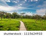 beautiful landscape in nature... | Shutterstock . vector #1115624933