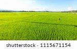 image of beautiful terraced... | Shutterstock . vector #1115671154
