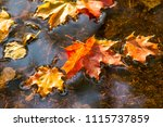 Maple Leaf In Water  Floating...