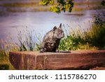 a dog sits on the bench   Shutterstock . vector #1115786270