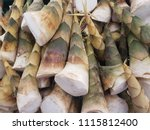 a lot of bamboo shoot in the... | Shutterstock . vector #1115812400