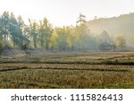 nature tree and the stump of...   Shutterstock . vector #1115826413