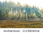 nature tree and the stump of...   Shutterstock . vector #1115826416