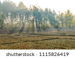 nature tree and the stump of...   Shutterstock . vector #1115826419