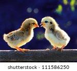 chicks chat | Shutterstock . vector #111586250