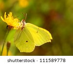 Brimstone Butterfly Sitting On...
