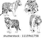 vector drawings sketches... | Shutterstock .eps vector #1115961758