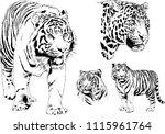 vector drawings sketches... | Shutterstock .eps vector #1115961764