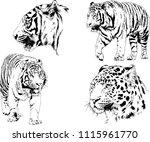 vector drawings sketches... | Shutterstock .eps vector #1115961770