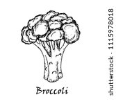 broccoli drawing. isolated on... | Shutterstock .eps vector #1115978018