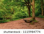 A bench in a peaceful setting in a wood in Dartmoor National Park - stock photo