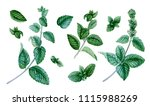 big peppermint set. summer herb.... | Shutterstock . vector #1115988269