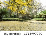 Beautiful Pond With Small...