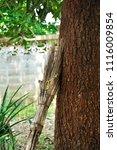 broom for sweeping leaves in... | Shutterstock . vector #1116009854