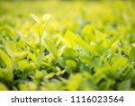 close up shot with selective... | Shutterstock . vector #1116023564