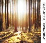 Autumn Forest Background  ...