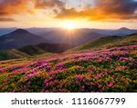 mountains during flowers... | Shutterstock . vector #1116067799