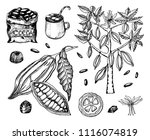 cocoa beans and hot chocolate.... | Shutterstock .eps vector #1116074819