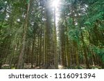 harz magic mountains forest in... | Shutterstock . vector #1116091394