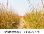 Footpath In Dry Grass Field In...
