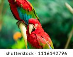 a macaw perched on a branch. | Shutterstock . vector #1116142796