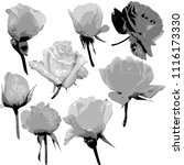 collage of delicate various... | Shutterstock . vector #1116173330