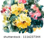 yellow roses hand painting...   Shutterstock .eps vector #1116237344