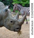 white rhinoceros or square...   Shutterstock . vector #1116243008