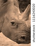 white rhinoceros or square...   Shutterstock . vector #1116243020