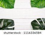 monstera and calathea leaves as ... | Shutterstock . vector #1116336584