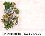 cute succulent plants on wooden ... | Shutterstock . vector #1116347198