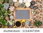blank  small blackboard... | Shutterstock . vector #1116347204
